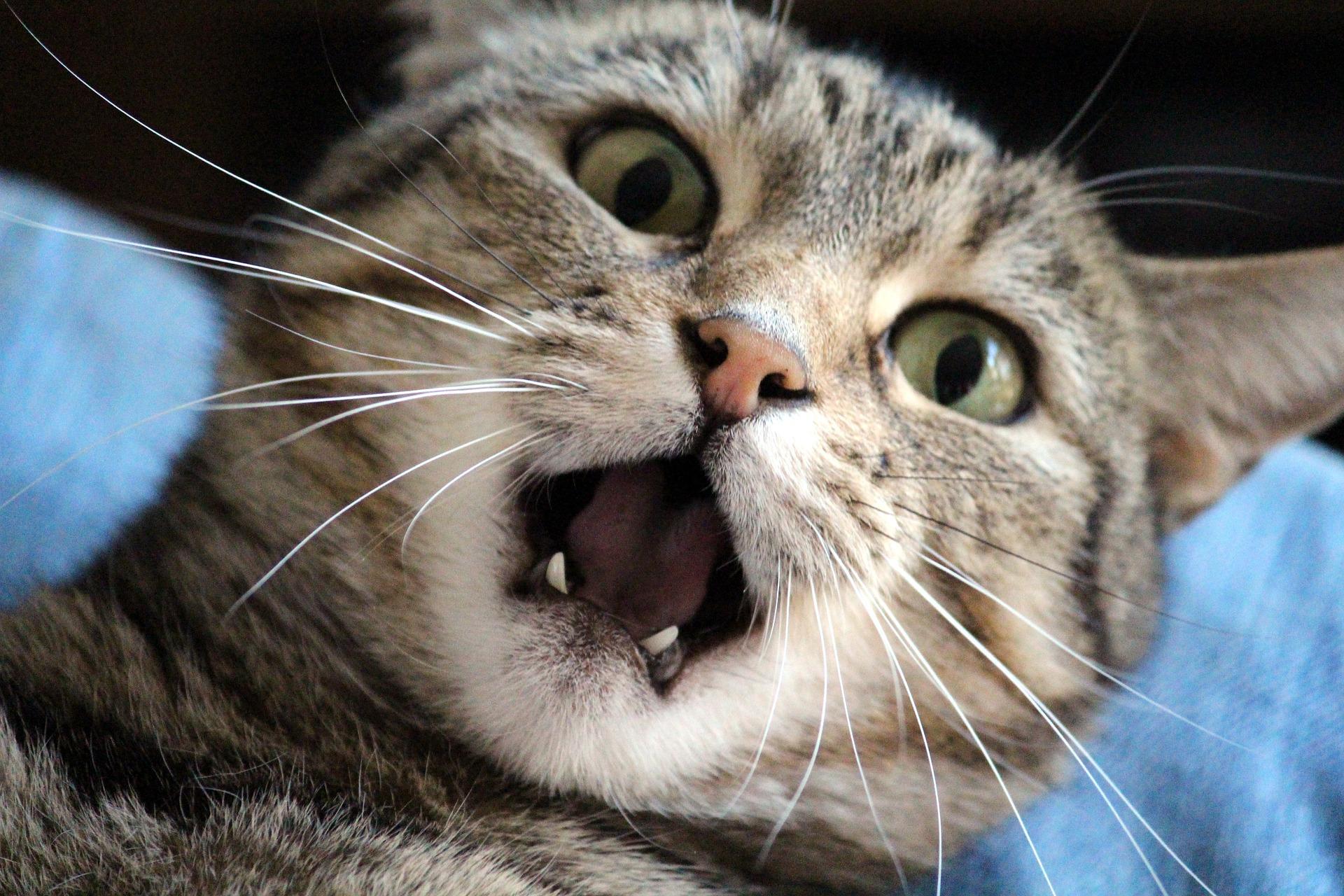 Noradrenalin: Wichtig und doch gefährlich für dein Tier