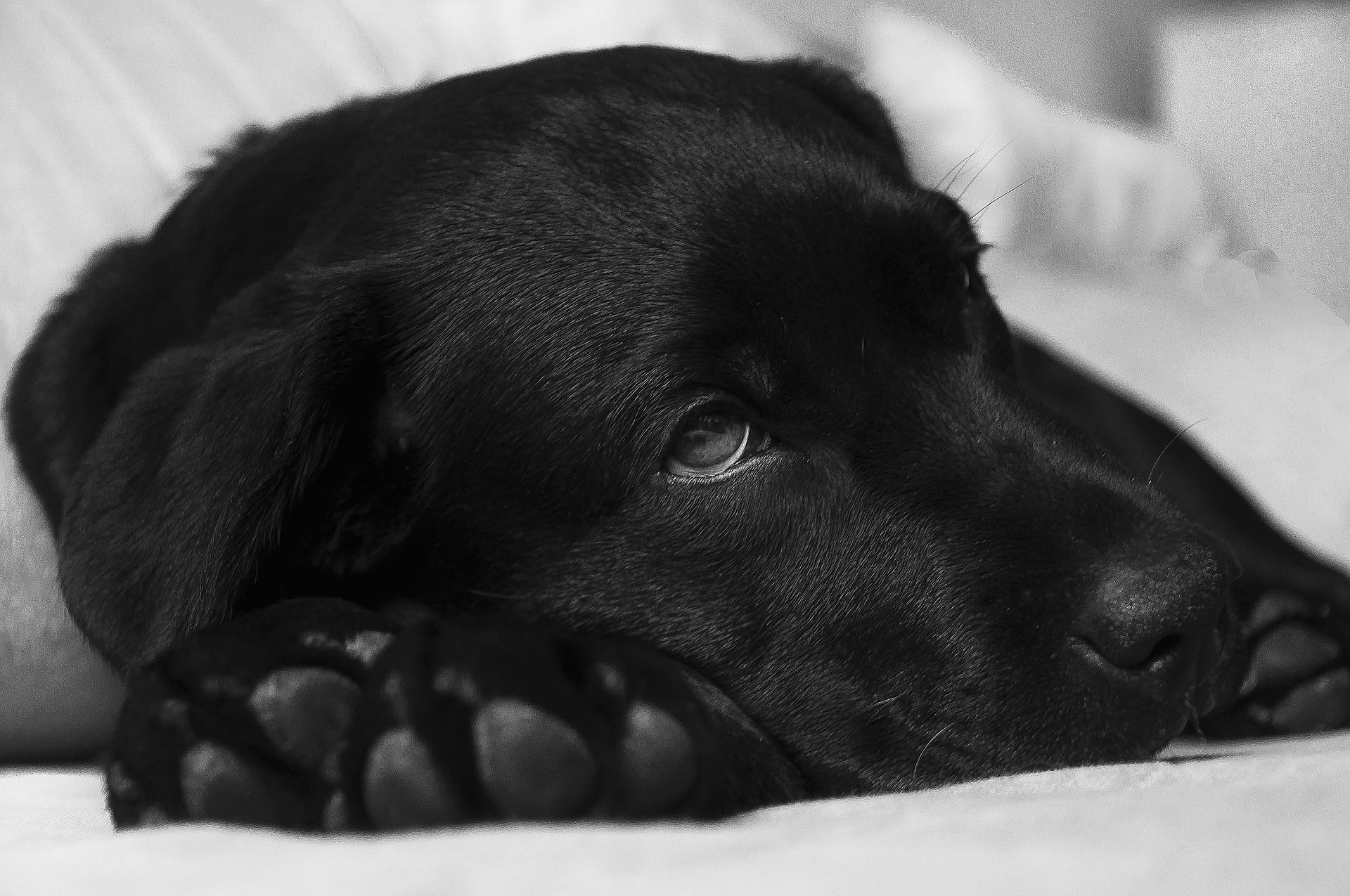 Magen-Darm-Erkrankungen bei Hunden und Katzen