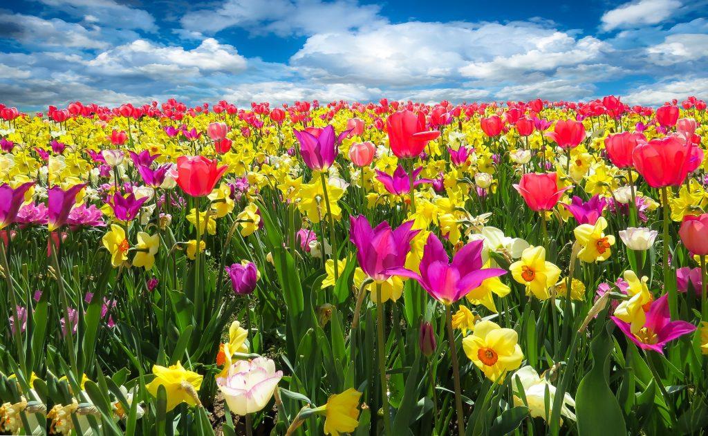 Giftige Pflanzen des Frühlings für Hunde