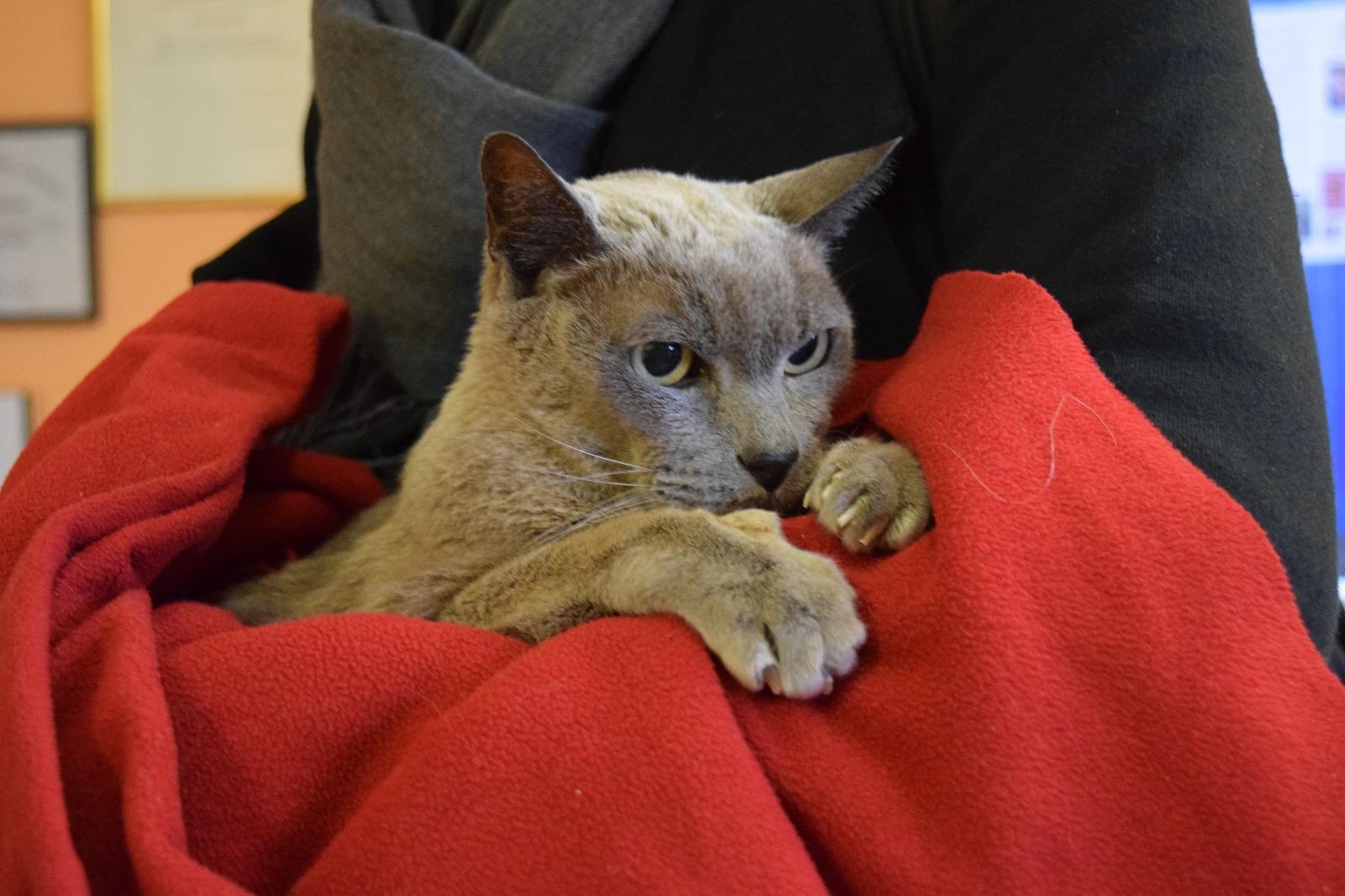 Unbekannte Katze beim Tierarzt
