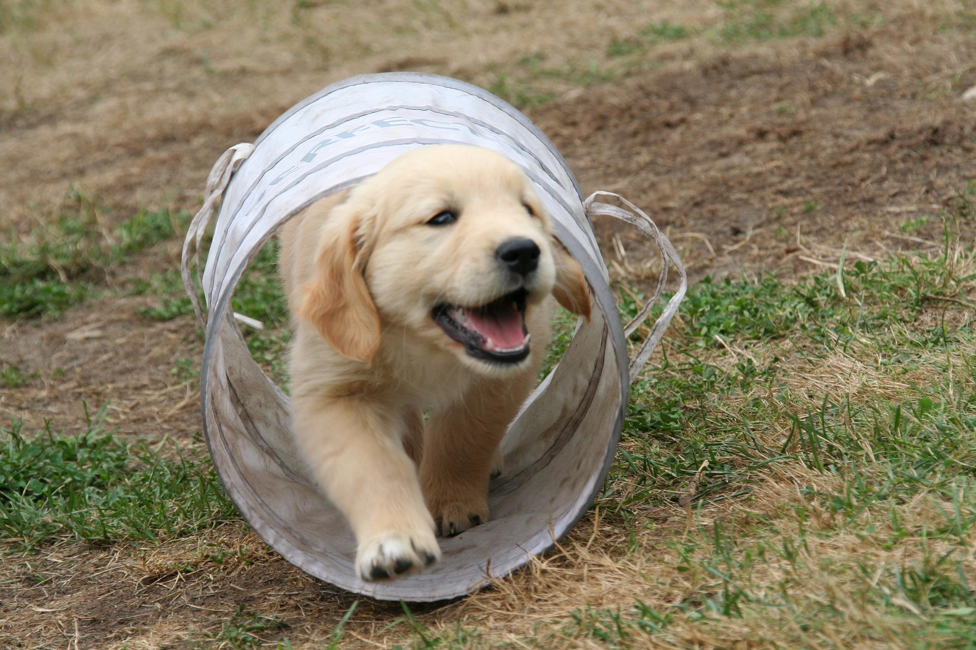 How-To: Dem Hundewelpen seinen Namen beibringen