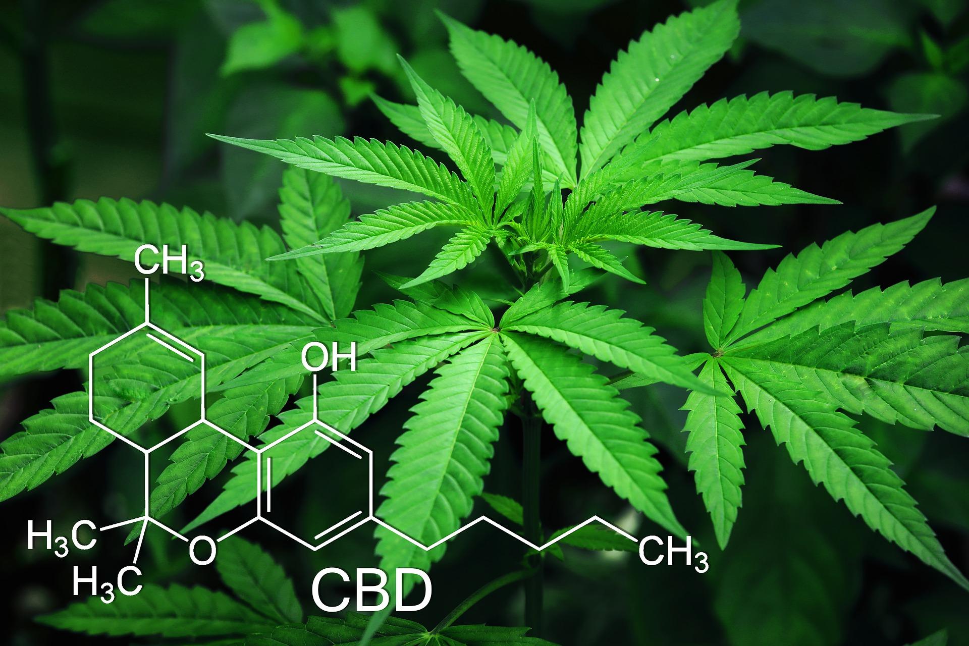 Wissenschaft: Cannabinoide helfen bei Entzündungen