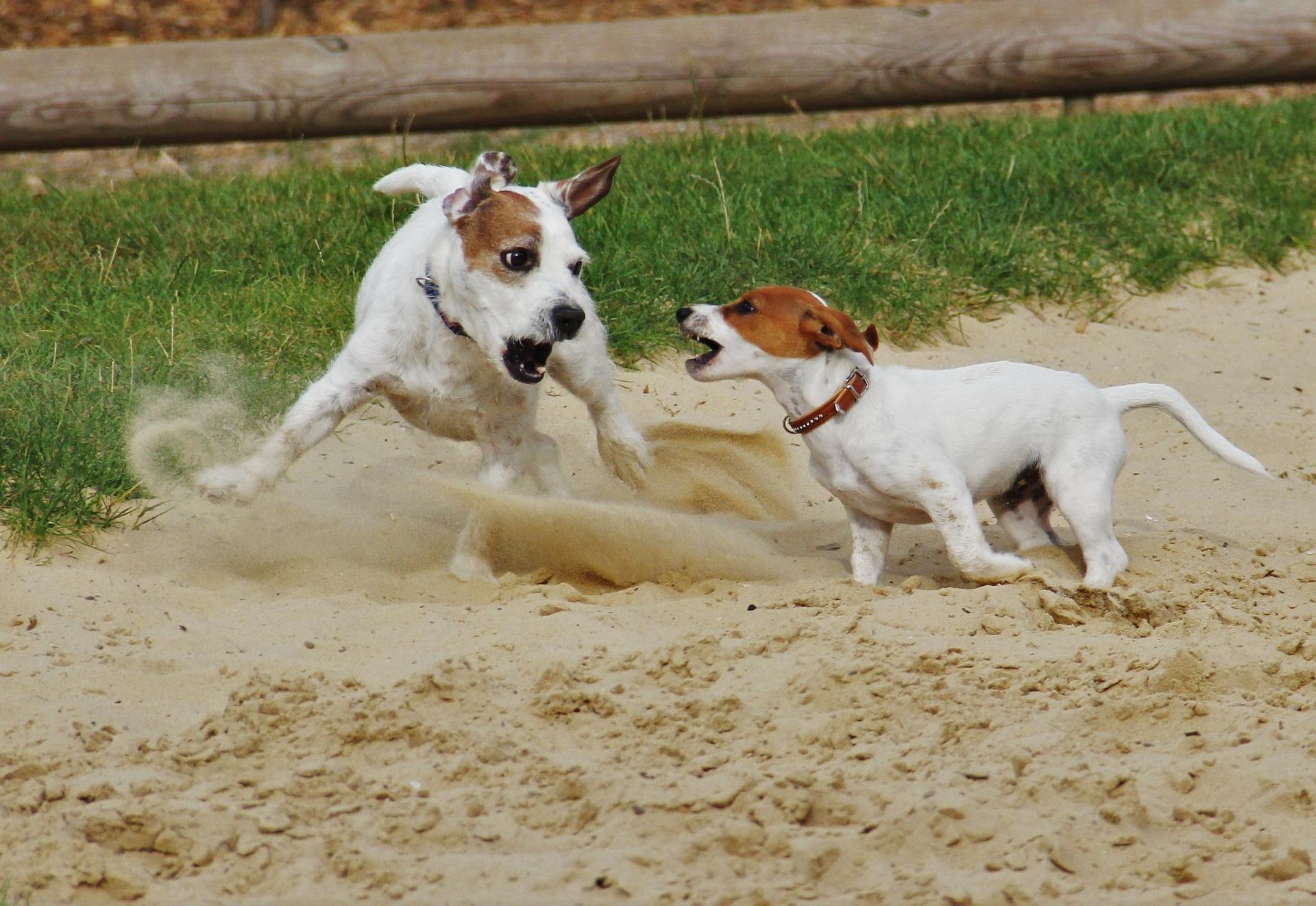 How-To: Den Hundewelpen stubenrein bekommen