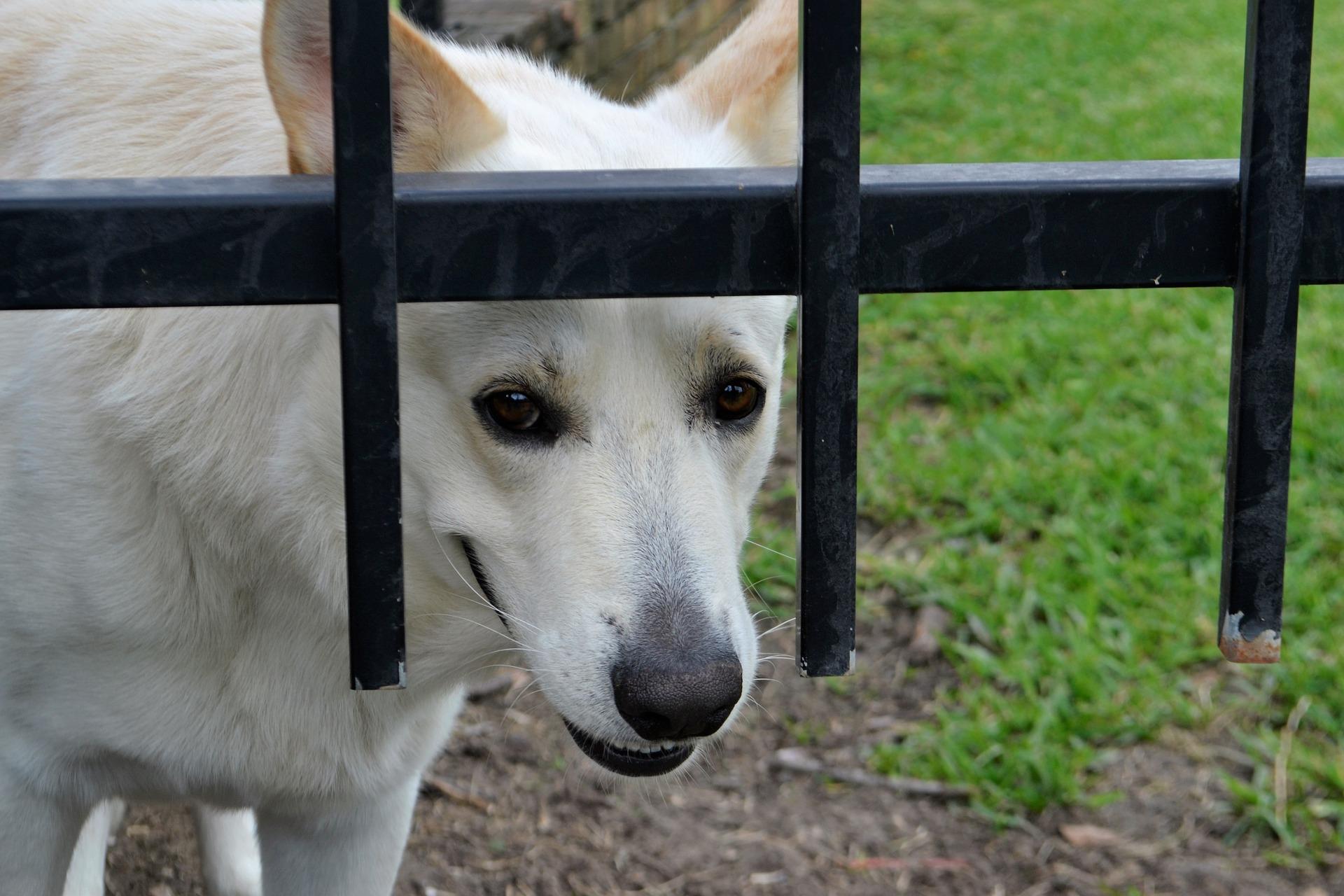 """Hunde und Angst 2: """"Bitte geh nicht weg!"""""""