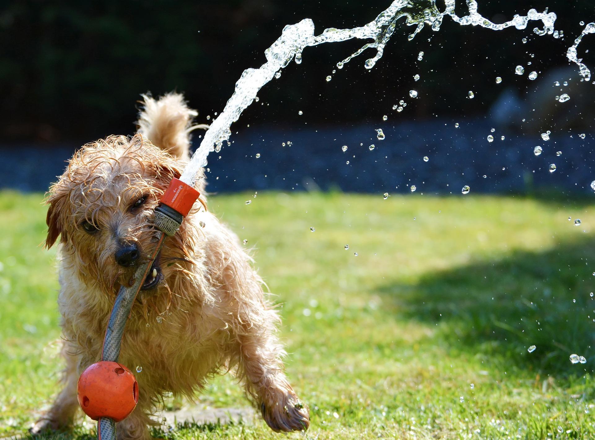 10 Tipps für einen genussvollen (Hunde-)Sommer