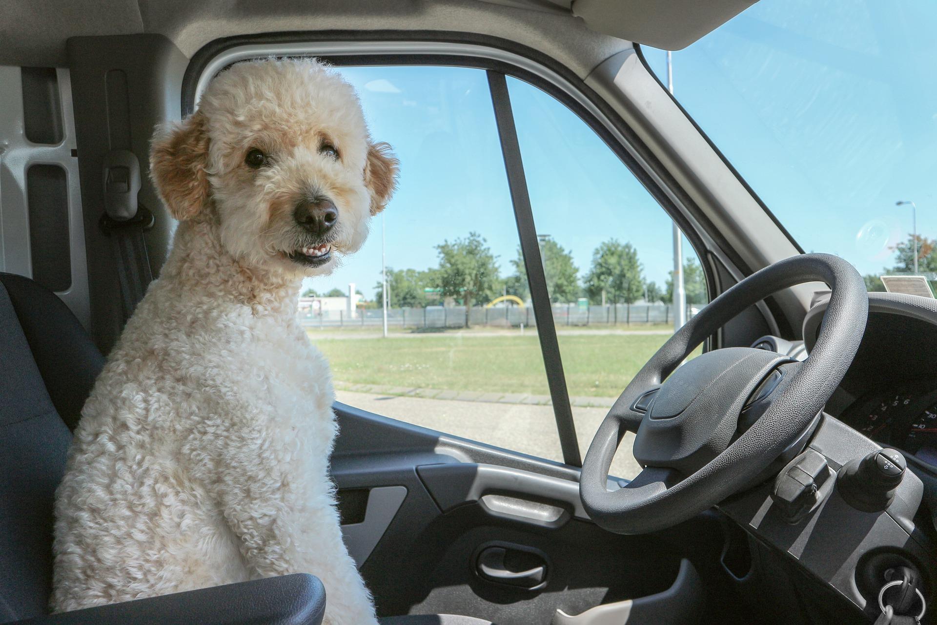 How-to: (Reise-)Stress beim Haustier minimieren