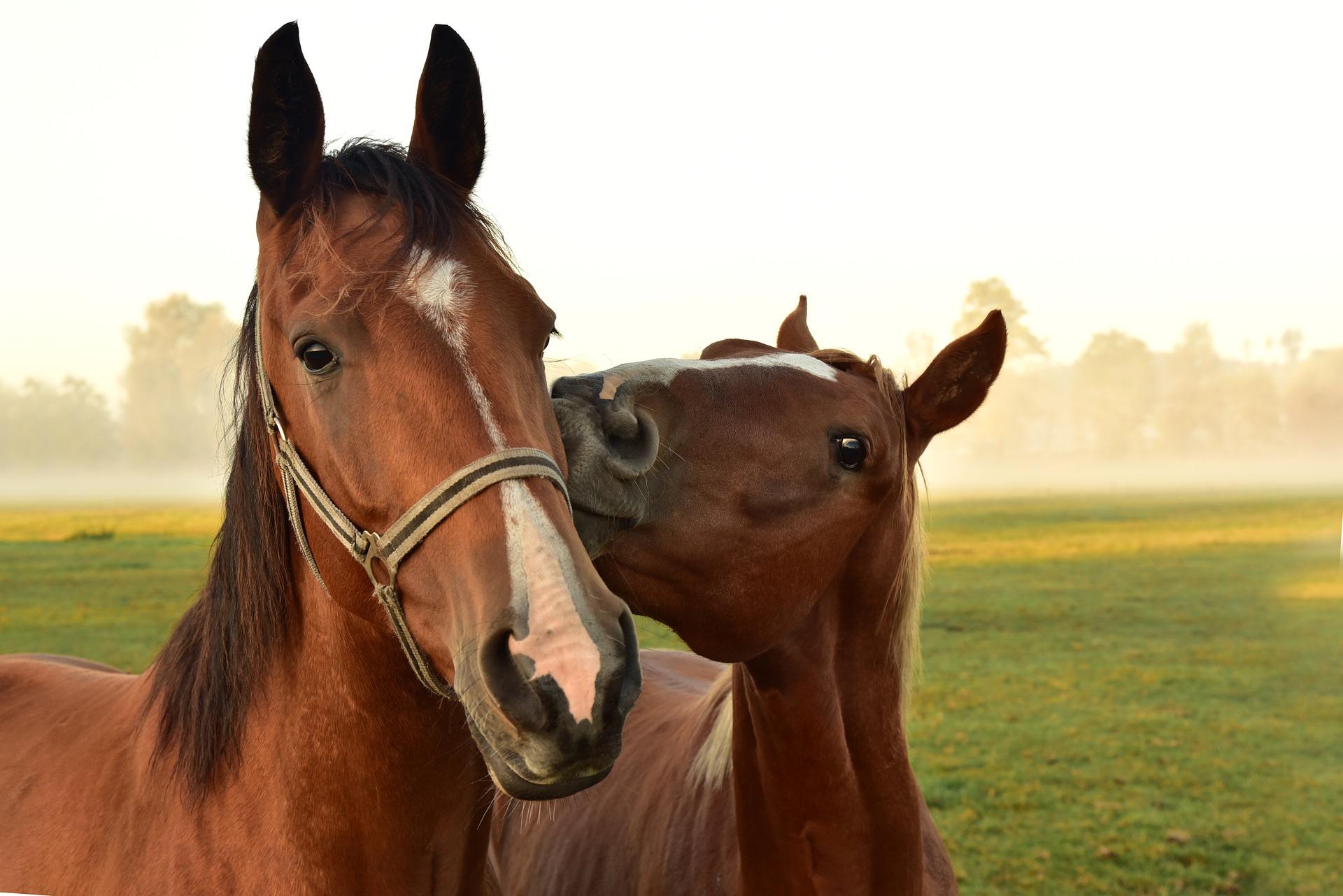 Herausforderung für die Tiermedizin: Equine Fibromyalgie