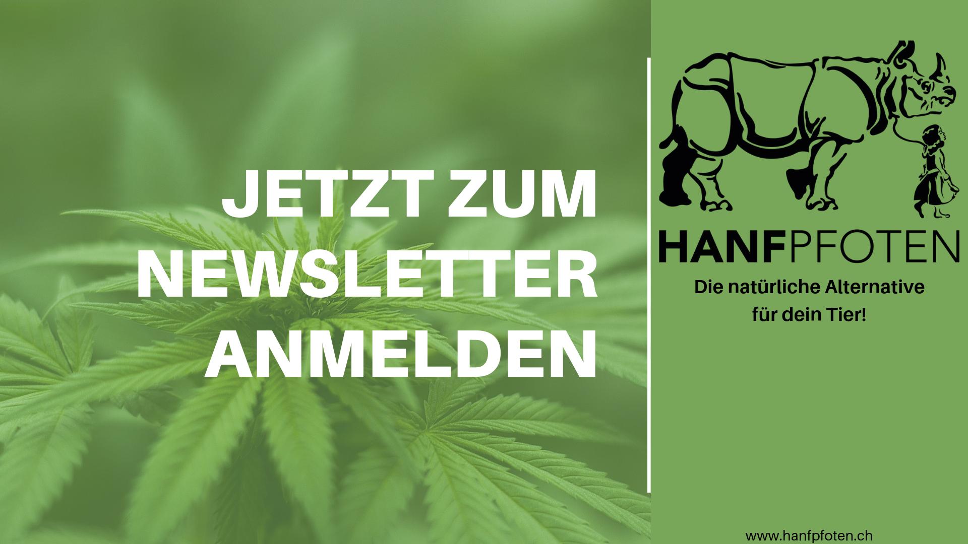 Der Hanfpfoten-Newsletter ist da!