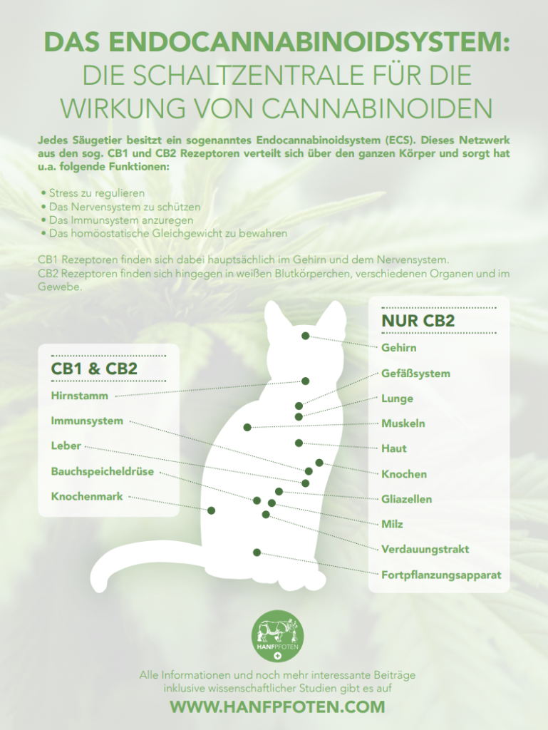 Das Endocannabinoidsystem - Die Schaltzentrale für die Wirkung von Cannabinoiden