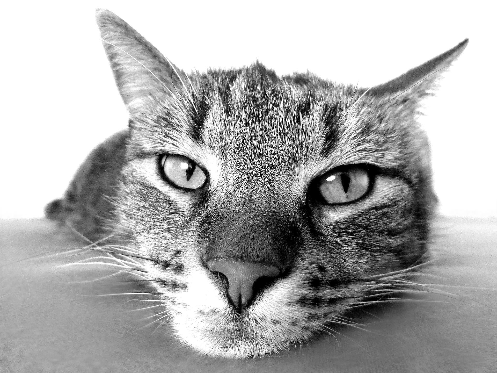 CBD für Tiere und das Herz-Kreislauf-System