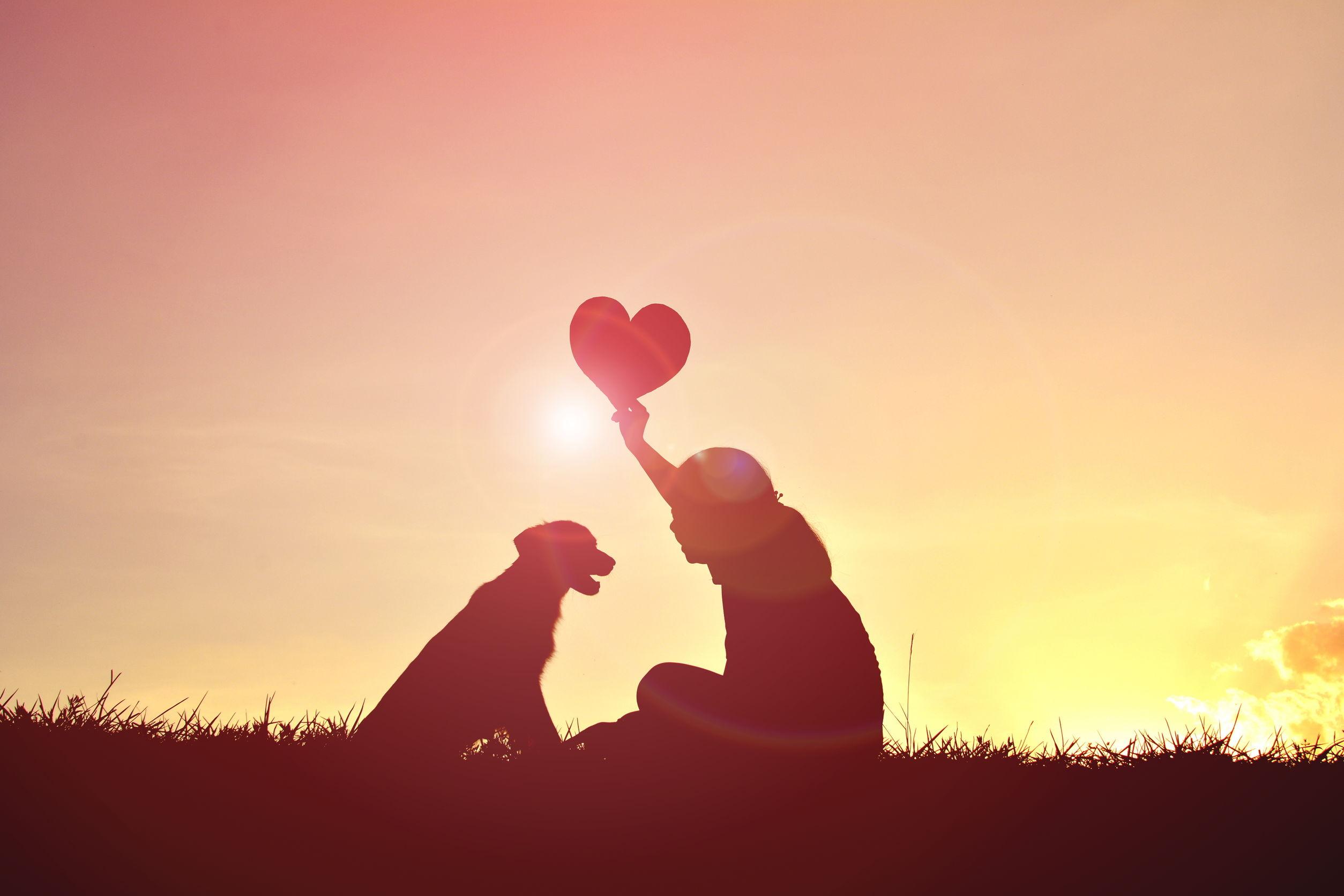 Liebe zu Tieren | hanfpfoten