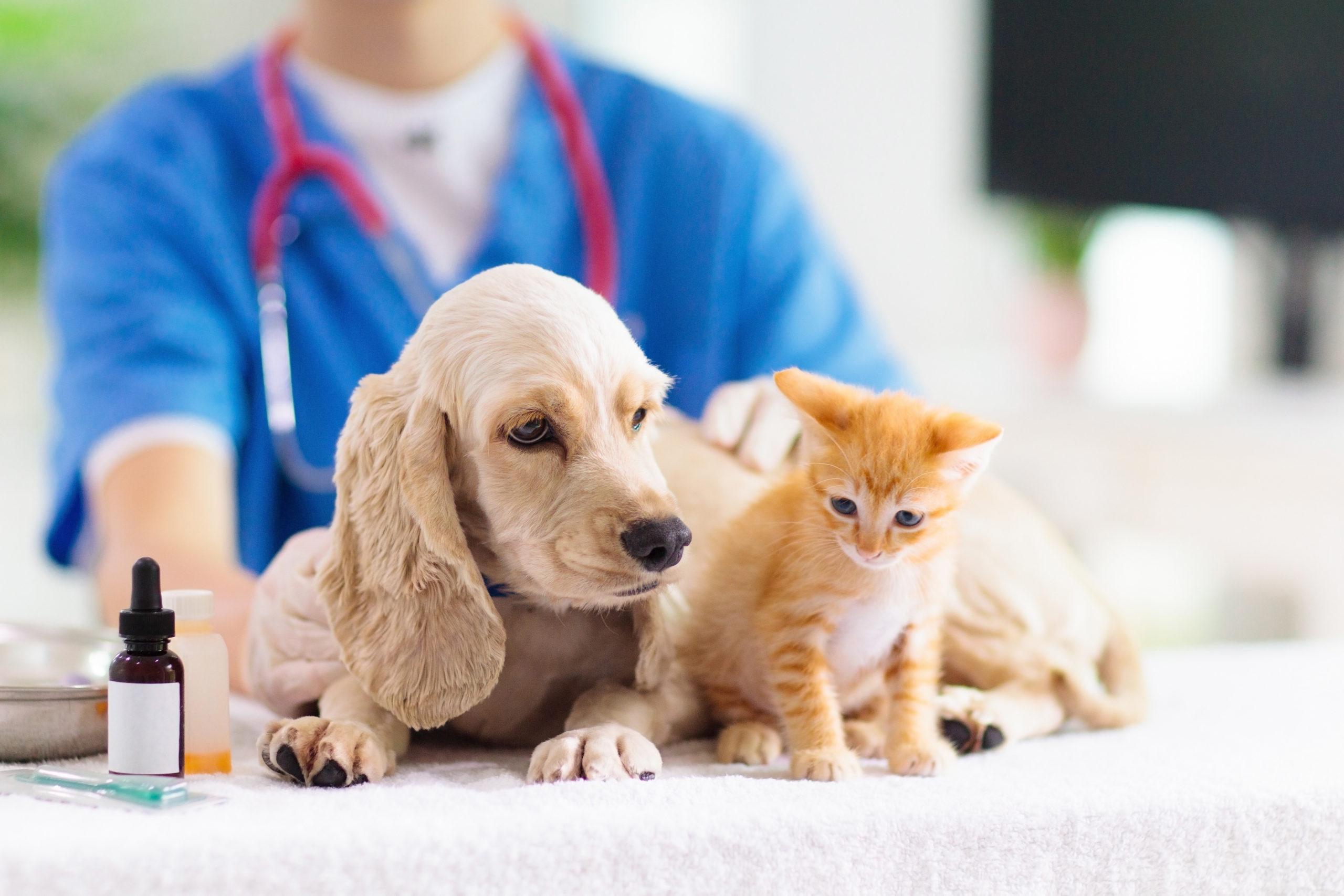 Hund und Katze beim Tierarzt