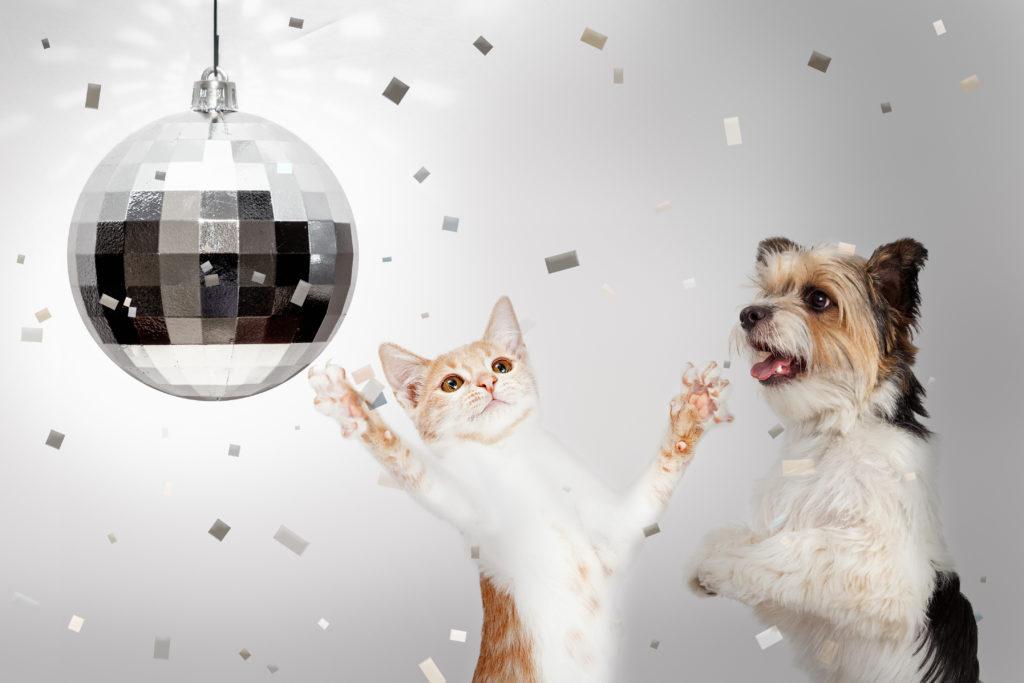 CBD-Öl Hunde Silvester