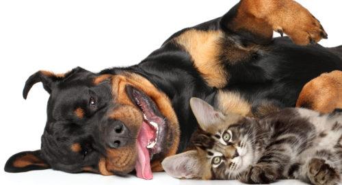 Katze und Hund liegen auf dem Boden vor einem weißen Hintergrund